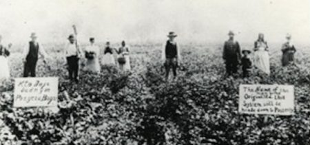 Hazen Pingree's Potato Patch vintage photography and early community gardens